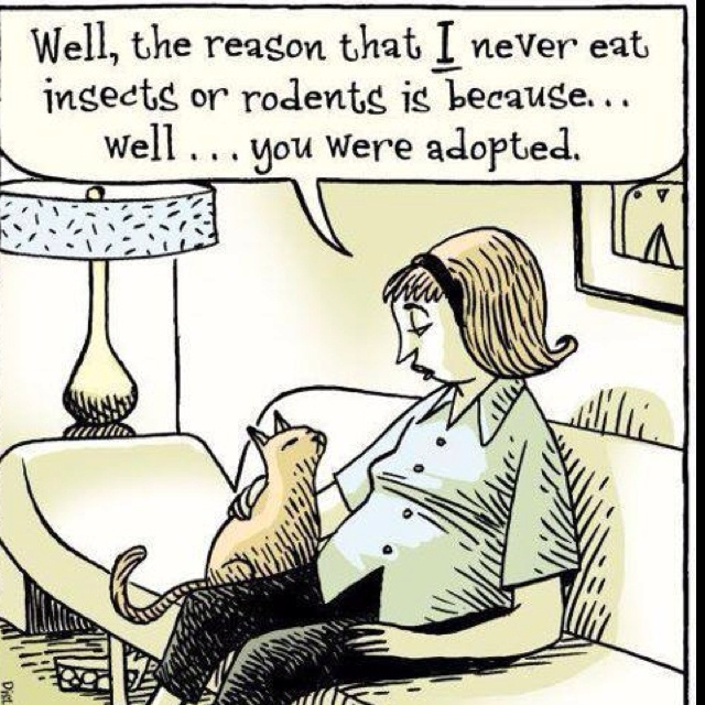 funny-cartoons-funny-cats