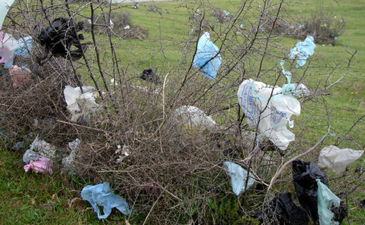 plastic bag litter